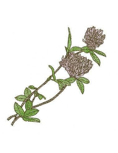 Motif de broderie machine  fleur de trèfle