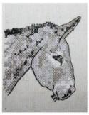Petit âne 13x18